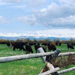 double J ranch Women in Ranching