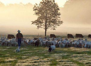 White_Oak-Pastures_Georgia-regenerativeagriculture